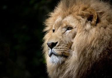 Liondr2